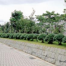 石川県立小松短期大学