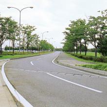 小松空港街路樹