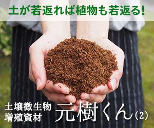 土壌微生物増殖資材「元樹くん」(2)