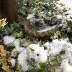 雪うさぎ2