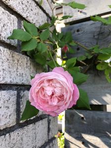 blog-69-2