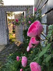 blog-ai69
